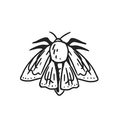 Black and white moth or butterfly with folded vector