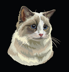 Colorful cat 5 vector