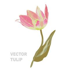 hand drawn tulip vector image