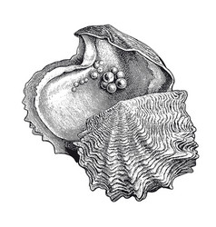 High detail oyster pearl engraving vector