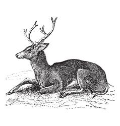 Mule deer vintage engraving vector