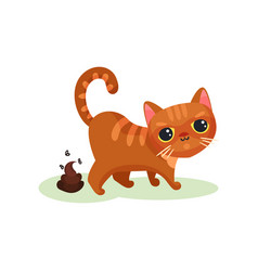 naughty kitten pooping mischievous cute little vector image