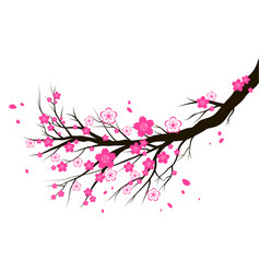 spring blooming cherry or sakura blossom branch vector image