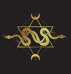 Two gold serpents over six pointed star line vector