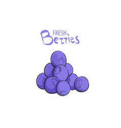 group of fresh blueberries vector image