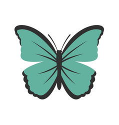 Insect butterfly icon flat style vector