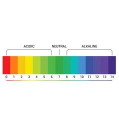 Ph scale indicator chart diagram acidic alkaline vector