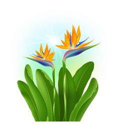 Tropical flowers strelitzia vector
