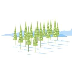 Cartoon Spruce Trees vector image