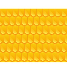 Pattern texture of Corn vector image