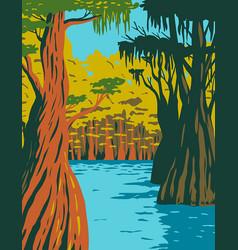 Bald cypress growing in swamp owl creek vector