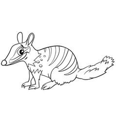 Cartoon numbat comic animal character coloring vector