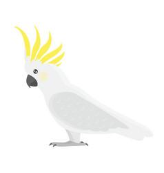 Cartoon tropical cockatoo parrot wild animal bird vector