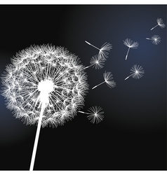 Flower dandelion on black background vector image