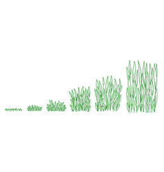 Green lawn grass plant growth stages development vector