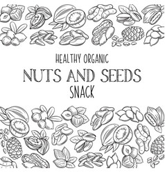 Hand drawn nuts and seeds vector