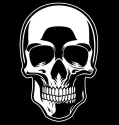 detailed skull vector image vector image