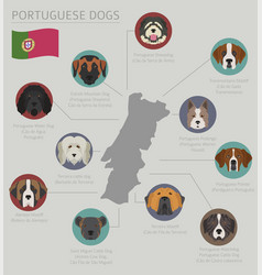 Dogs country origin portuguese dog breeds vector