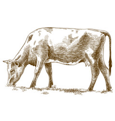 Engraving cow vector