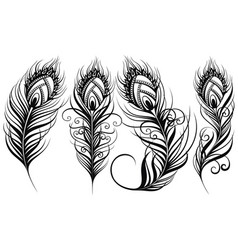 exotic bird feathers vector image