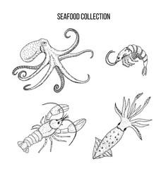 octopus squid shrimplobster sea wildlife vector image