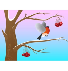 Bullfinch2 vector