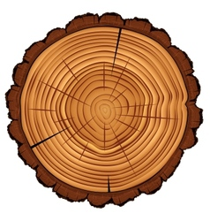 Cross section tree stump isolated on white vector