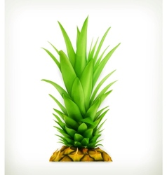 Pineapple top vector