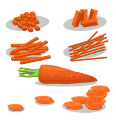 ripe vegetable yellow carrot vector image
