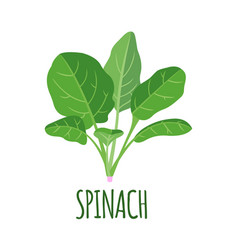 spinach icon in flat style isolated on white vector image