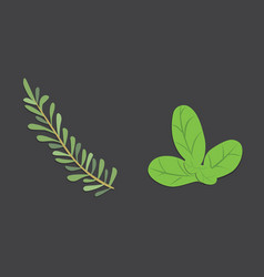 aromatic herbs set fresh and spices vector image
