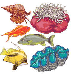 reef animals set vector image
