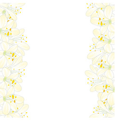 snow white agapanthus border vector image
