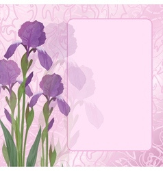 flowers iris on pink background vector image vector image