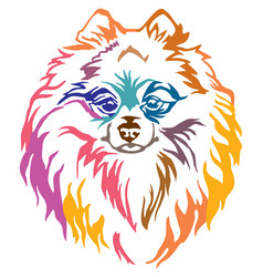colorful decorative portrait of dog pomeranian vector image