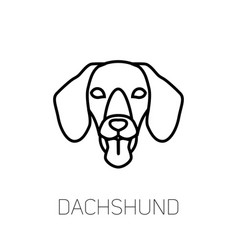 dachshund tongue out dog breed linear face icon vector image