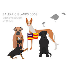 Dogs by country of origin spain balearic islands vector