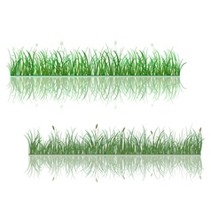 Green grass patterns with reflections vector image