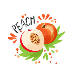 hand draw colored peach vector image