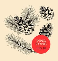 Set of pine cones and branches vector