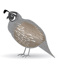 Funny quail on a white background vector