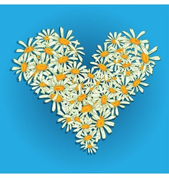 Heart flowers camomile vector image vector image