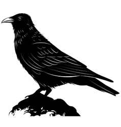 Black raven on white background vector image