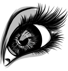 Eye on white background woman eye the eye logo vector