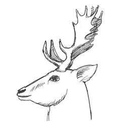 head of deer vector image