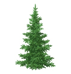 Christmas fir tree isolated vector image