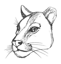 head of lioness vector image