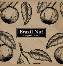 brazil nuts tree design template vintage floral vector image
