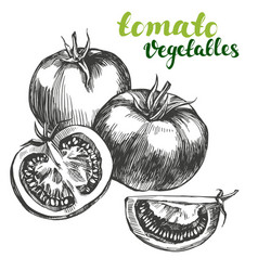 tomato vegetable set hand drawn vector image