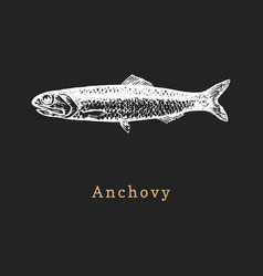 Anchovy on black background fish vector